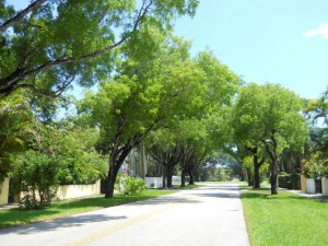Coral Gables Real Estate Photos -- Neighborhood Street 1